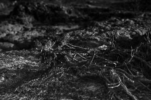 noir-blanc-lumiere-seche-05