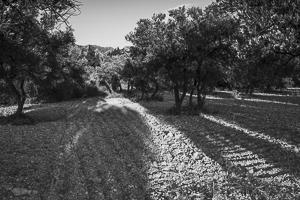 noir-blanc-lumiere-seche-19
